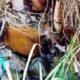 Warga Martopuro Resahkan Limbah PT Agar Sari Jaya, Diduga Cemari Lingkungan