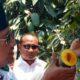Bupati Pasuruan Buka Festival Mangga Apukat khas Pasuruan