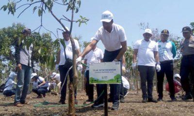 Hari Lingkungan Hidup, HCML Tanam Ribuan Bibit Mangrove dan Mangga