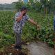 Tanggul di Pasuruan Jebol Tak Segera Diperbaiki, 4 Dusun Tenggelam