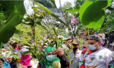 Khofifah Indar Parawansa petik buah mangga alpukat di salah satu kebun milik petani.